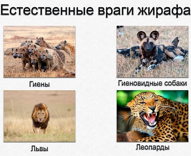Естественные враги