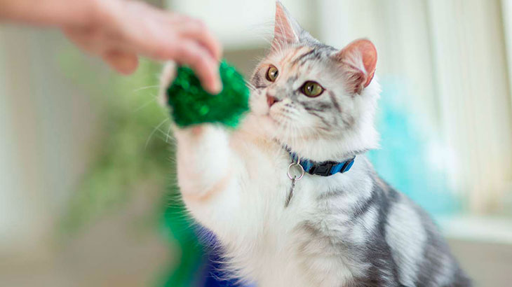 Есть ли у кошки диабет?