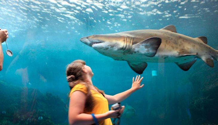 Сколько живут акулы в среднем в неволе?