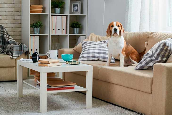 Как ухаживать за собакой в домашних условиях в квартире?