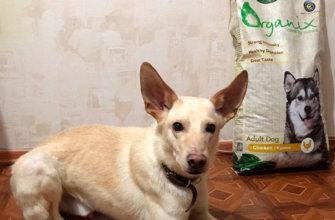 Обзор корма для собак Organix