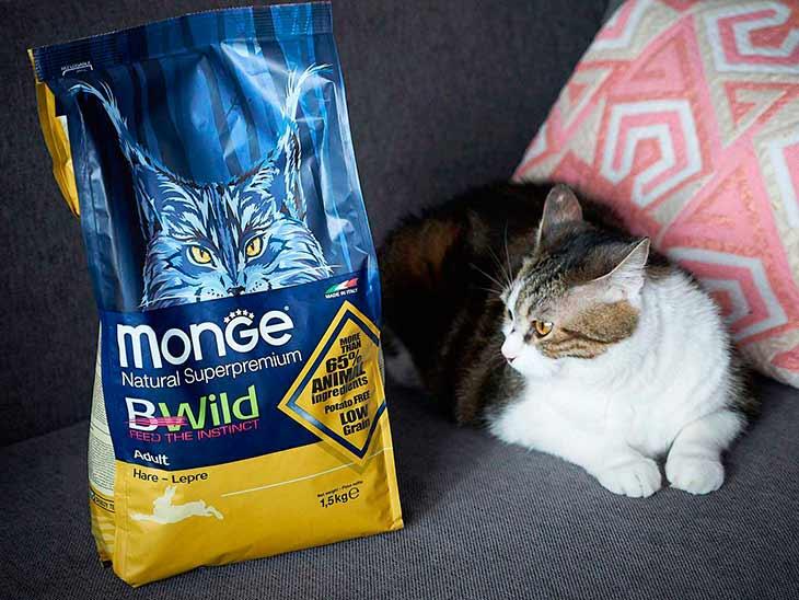 Обзор корма для кошек Monge