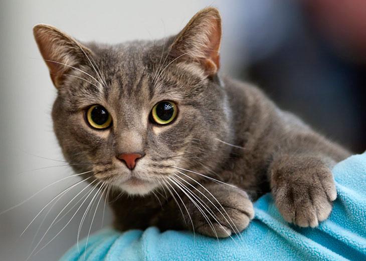 Как лечить кошке язву желудка в домашних условиях