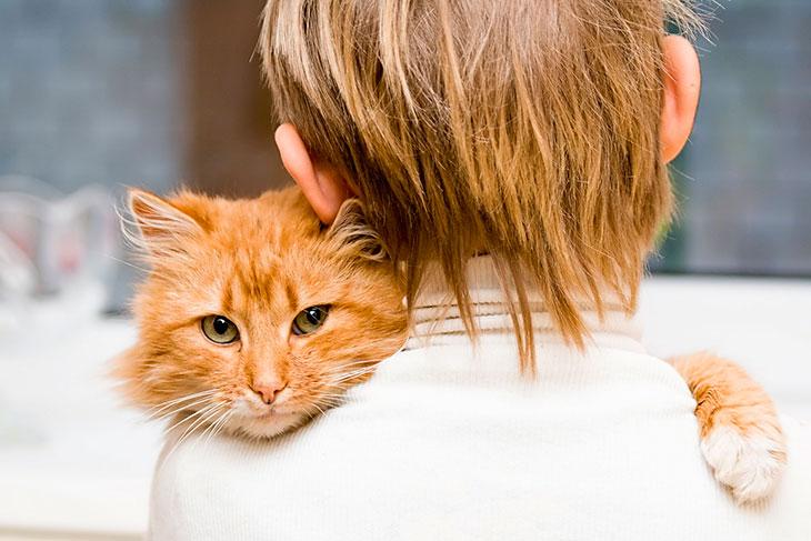 Молитва о выздоровлении кошки