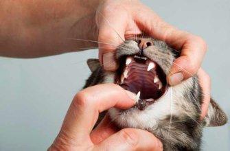 У кошки кровь изо рта