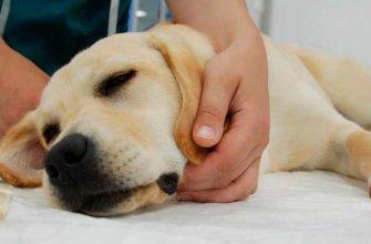 Онкология у собаки