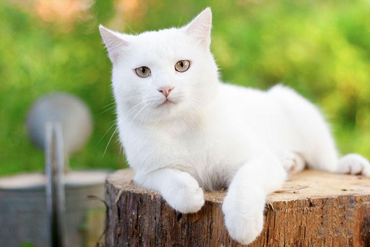 Значение белой кошки во сне в различных ситуациях