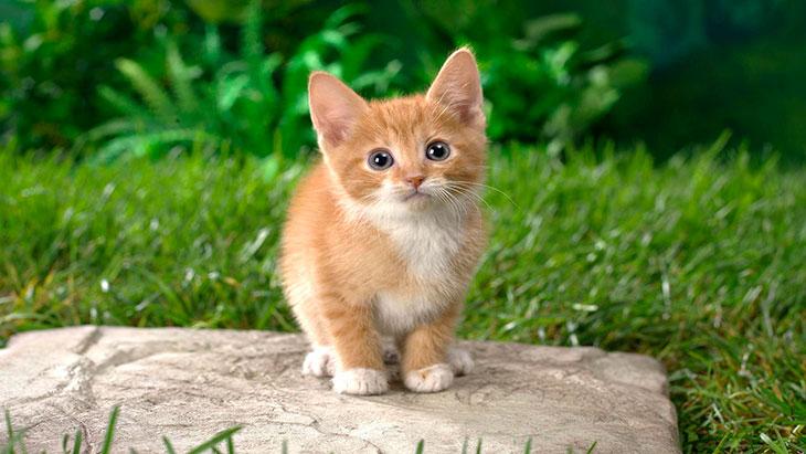 Как выглядел рыжий котенок