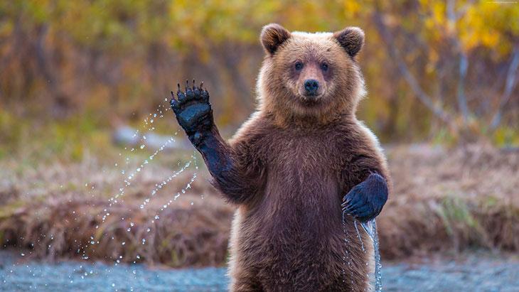 Интересные факты о медведях
