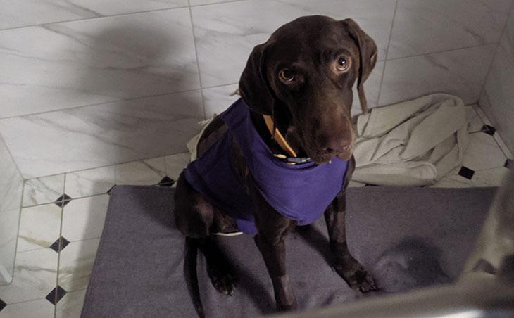 Лечение пневмоторакса у собак