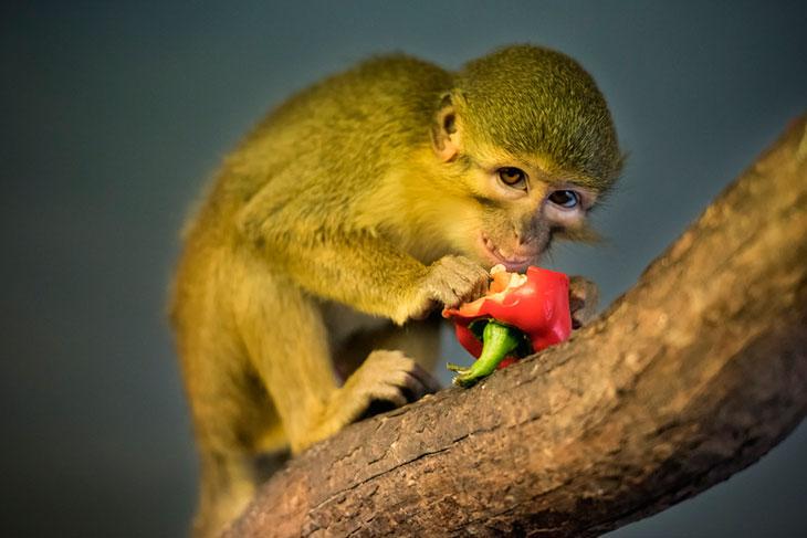 Где живут маленькие обезьянки?