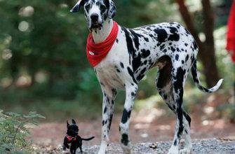 Особенности содержания декоративных собак