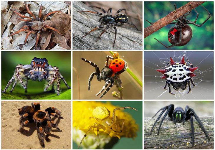 Признаки паукообразных