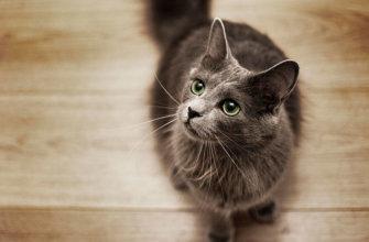 Топ 10 самих редких пород кошек