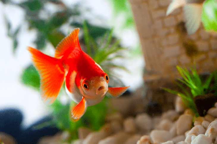 Нужно ли аквариумной рыбке имя?
